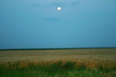 agricultura, grau, luna 1-Jean-Mihai PALSU