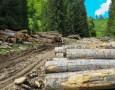 lemne-padure-550x380